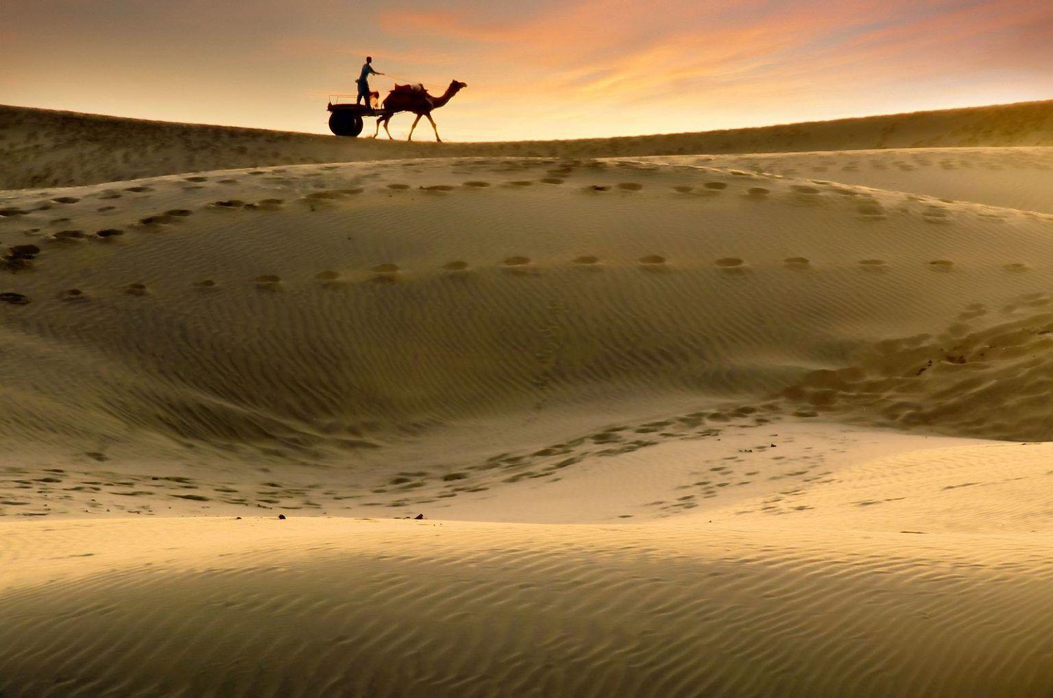 Thaar Desert & Camel